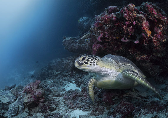 5-3-experiences-diving-turtle-kyle-mcburnie-2016-1660525