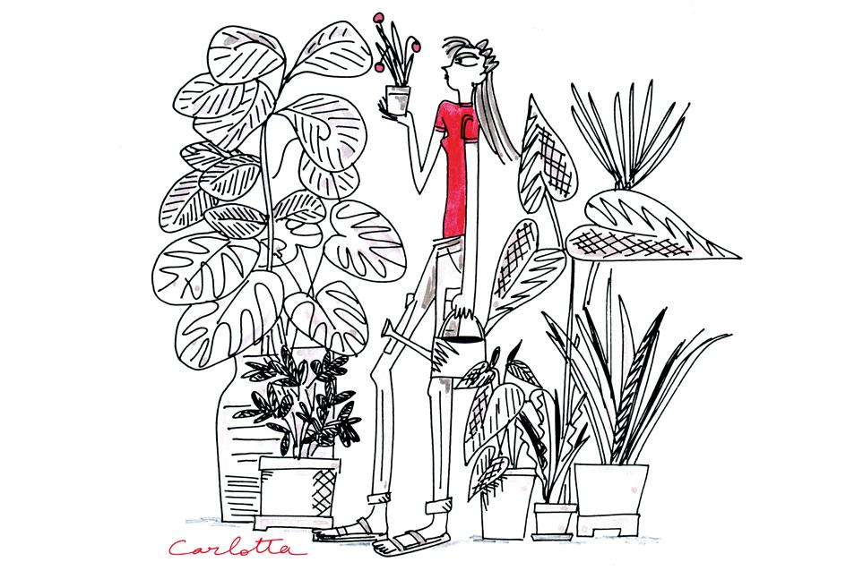 carlotta1