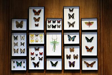 Papillons, 10 euros à 500 euros.