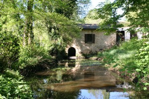 Bourde-gradignan-IMG-3565